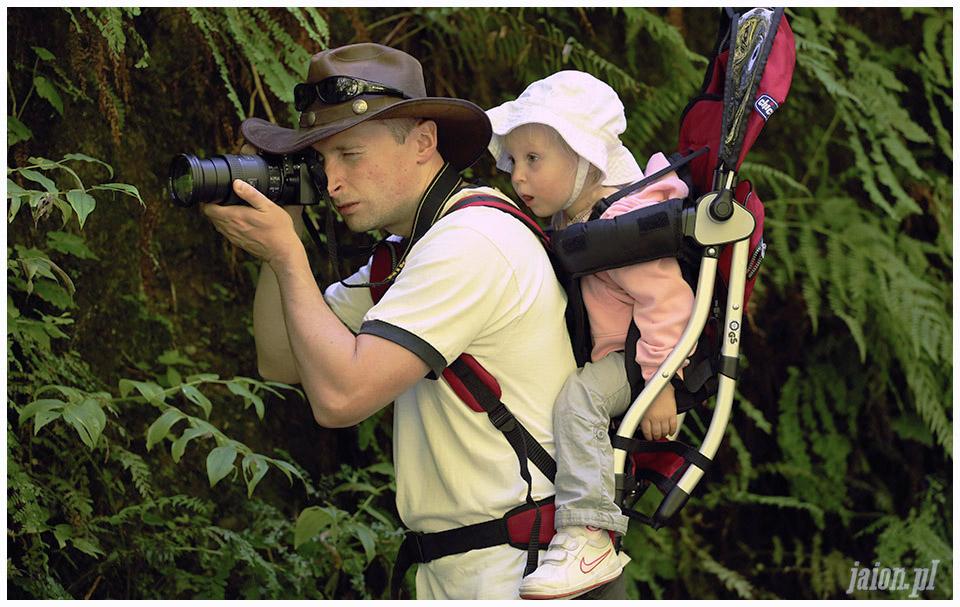 blog_o_ameryce_ameryka_usa_redwoods_1