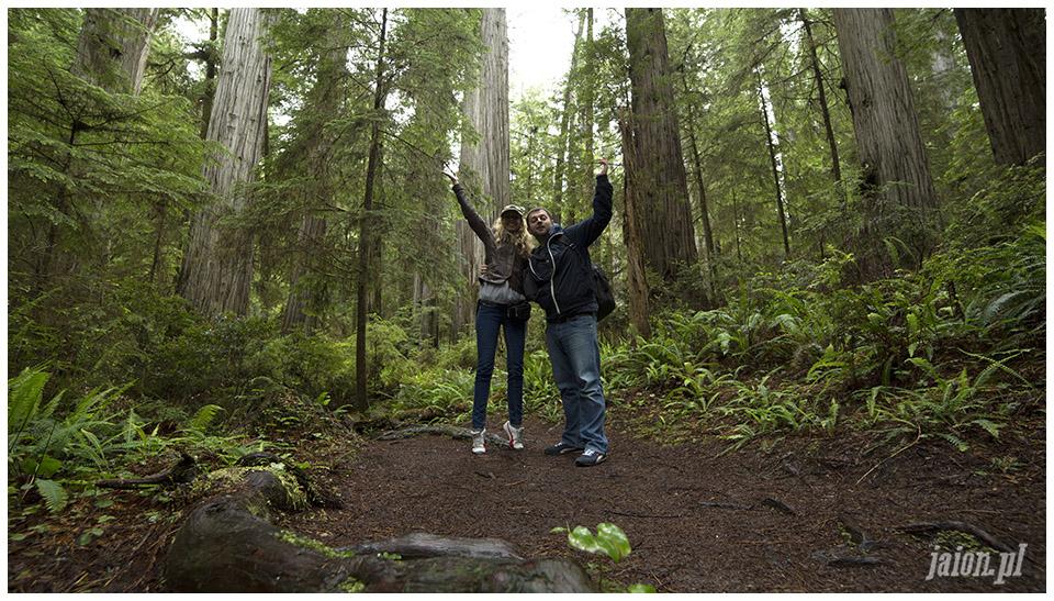 blog_o_ameryce_ameryka_usa_redwoods_3
