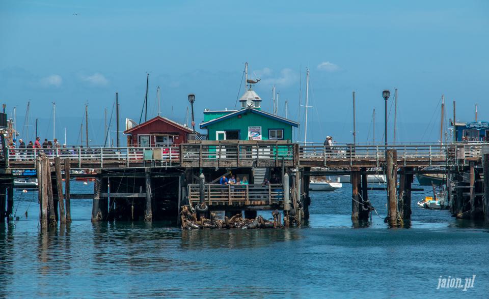 ameryka_usa_blog_big_sur_monterey_17_miles_drive_pacific_ocean-104