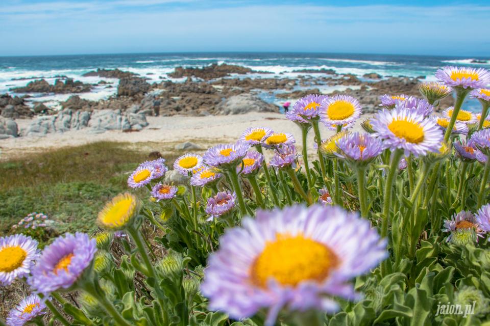 ameryka_usa_blog_big_sur_monterey_17_miles_drive_pacific_ocean-119