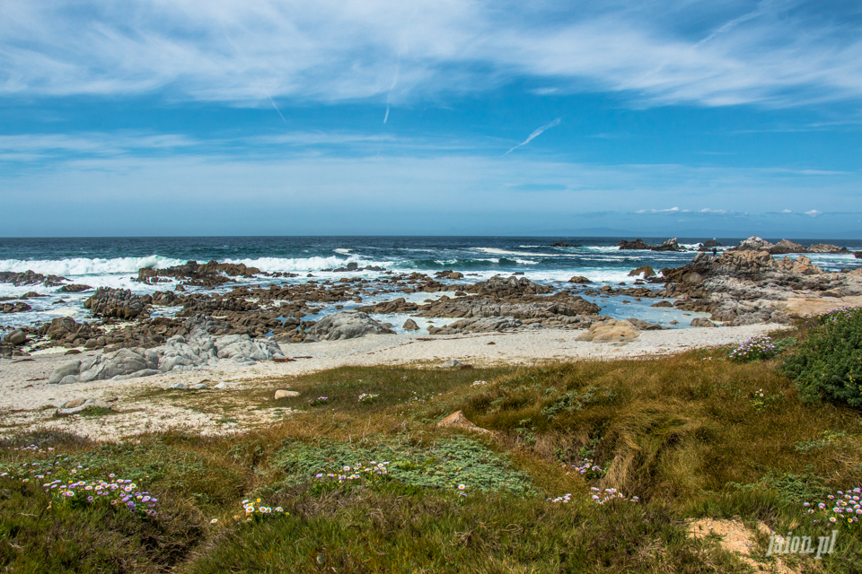 ameryka_usa_blog_big_sur_monterey_17_miles_drive_pacific_ocean-129