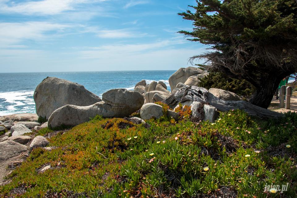 ameryka_usa_blog_big_sur_monterey_17_miles_drive_pacific_ocean-5