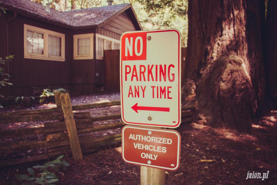 ameryka_usa_big_basin_redwood_state_park-10
