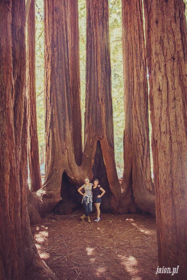 ameryka_usa_big_basin_redwood_state_park-14