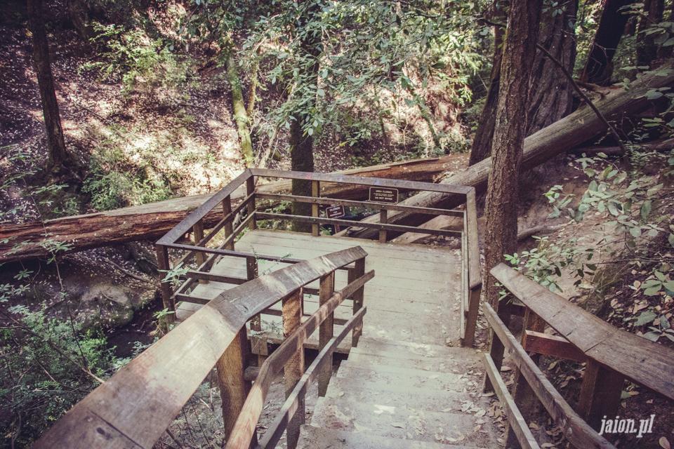 ameryka_usa_big_basin_redwood_state_park-37