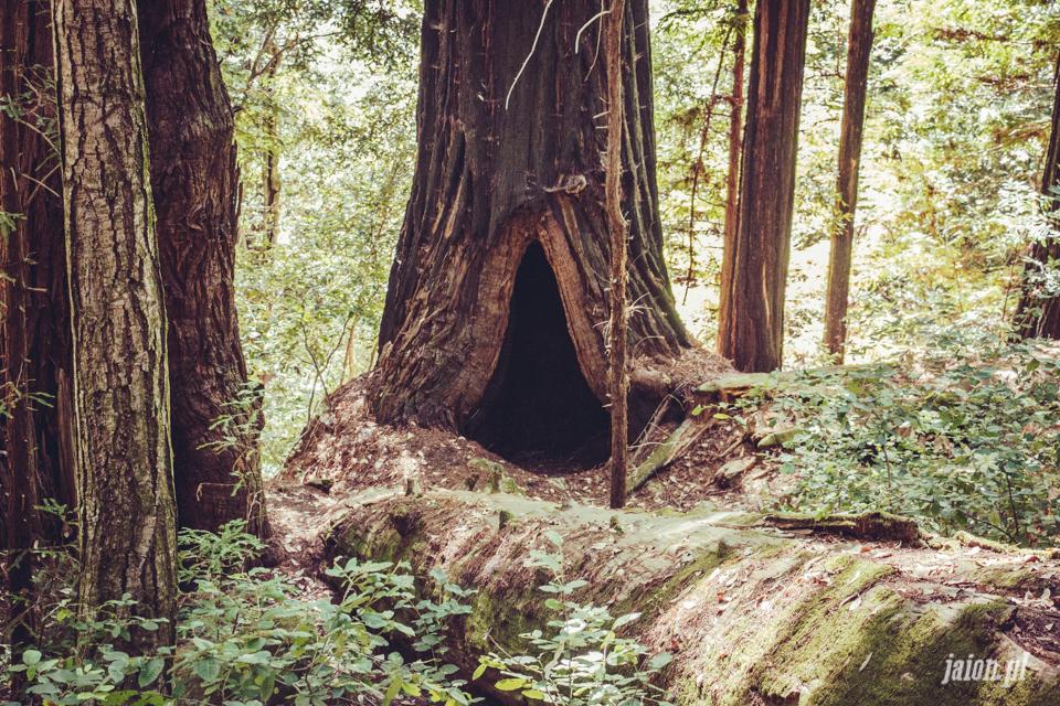 ameryka_usa_big_basin_redwood_state_park-43