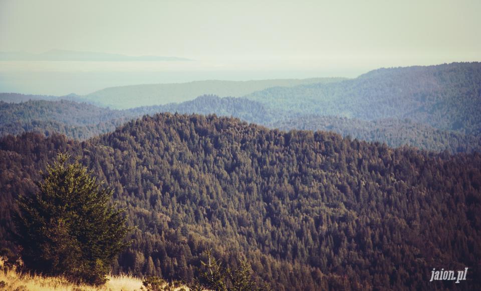 ameryka_usa_big_basin_redwood_state_park-48