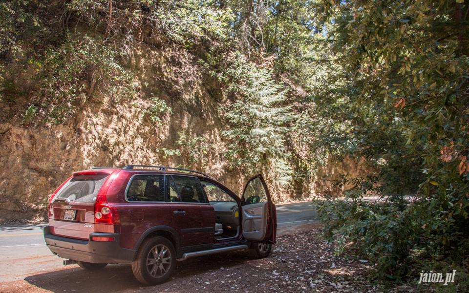 ameryka_usa_big_basin_redwood_state_park-5