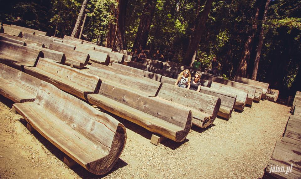 ameryka_usa_big_basin_redwood_state_park-50
