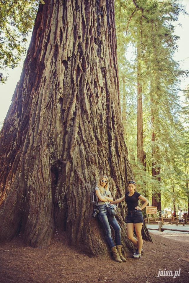 ameryka_usa_big_basin_redwood_state_park-51