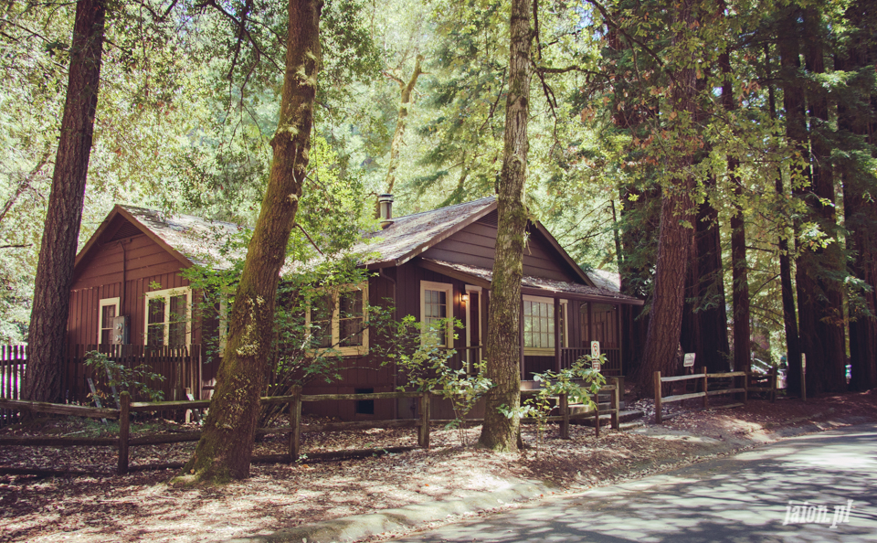 ameryka_usa_big_basin_redwood_state_park-9