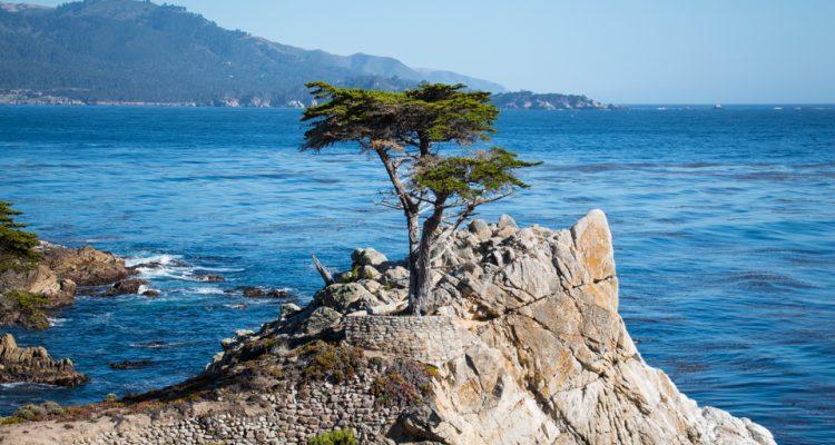 ameryka_usa_blog_monterey_kalifornia_pebble_beach_17_mile_drive_big_sur-142