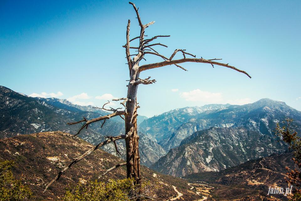 ameryka_usa_blog_sequoia_national_park-2