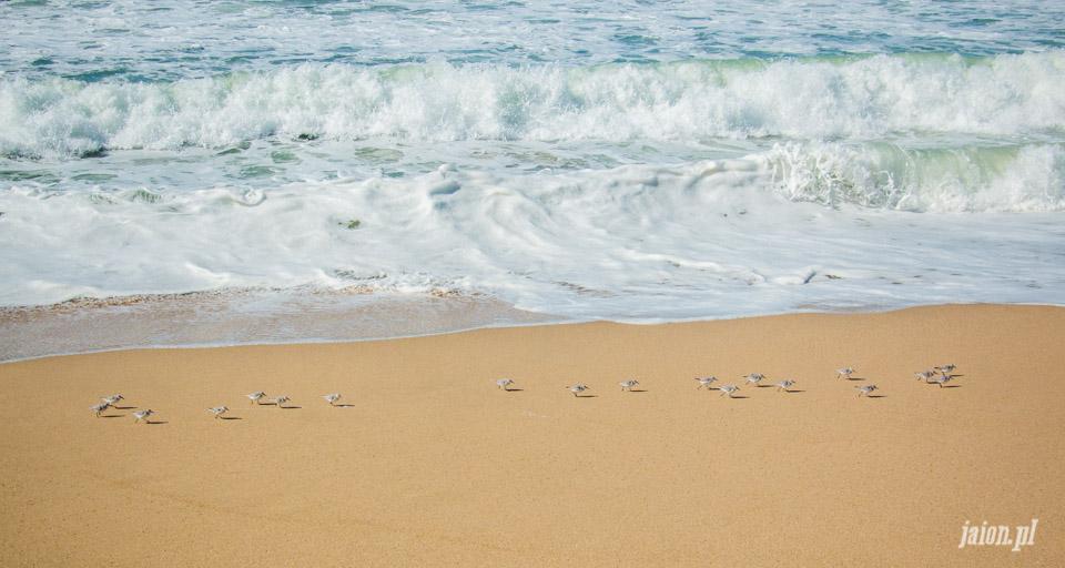 ameryka_usa_blog_ocean_pacyfik_kalifornia-28