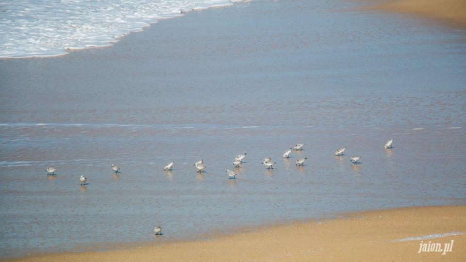 ameryka_usa_blog_ocean_pacyfik_kalifornia-30
