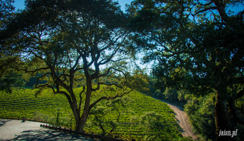 ameryka_usa_blog_kalifornia_wino_thomas_fogarty_winery-80