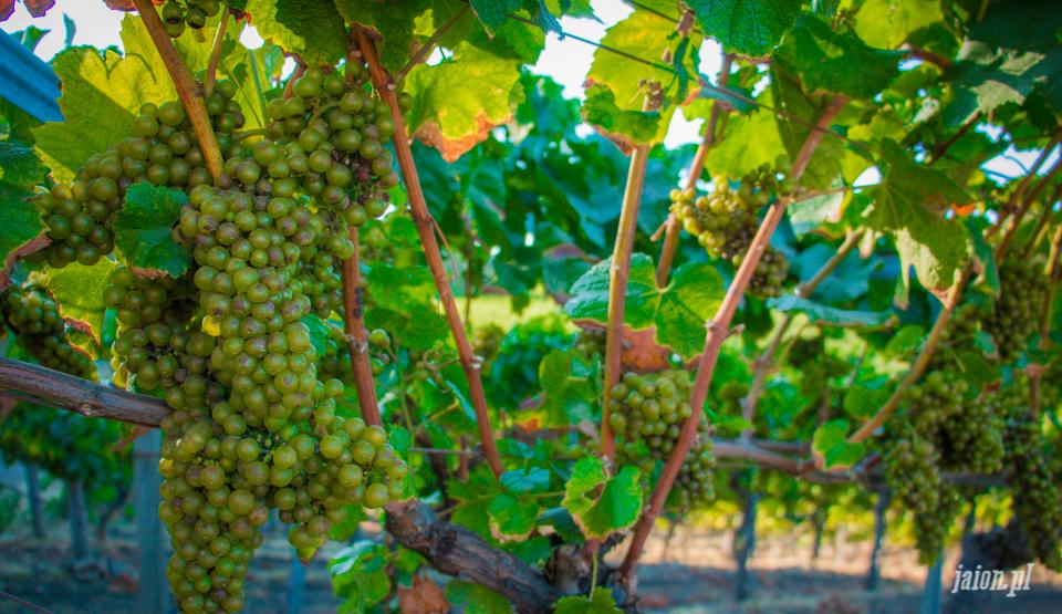 ameryka_usa_blog_kalifornia_wino_thomas_fogarty_winery-88