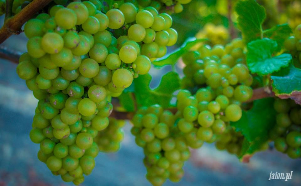 ameryka_usa_blog_kalifornia_wino_thomas_fogarty_winery-89