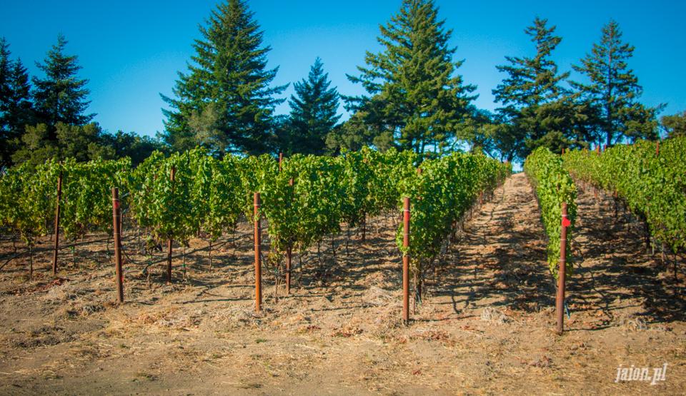 ameryka_usa_blog_kalifornia_wino_thomas_fogarty_winery-93