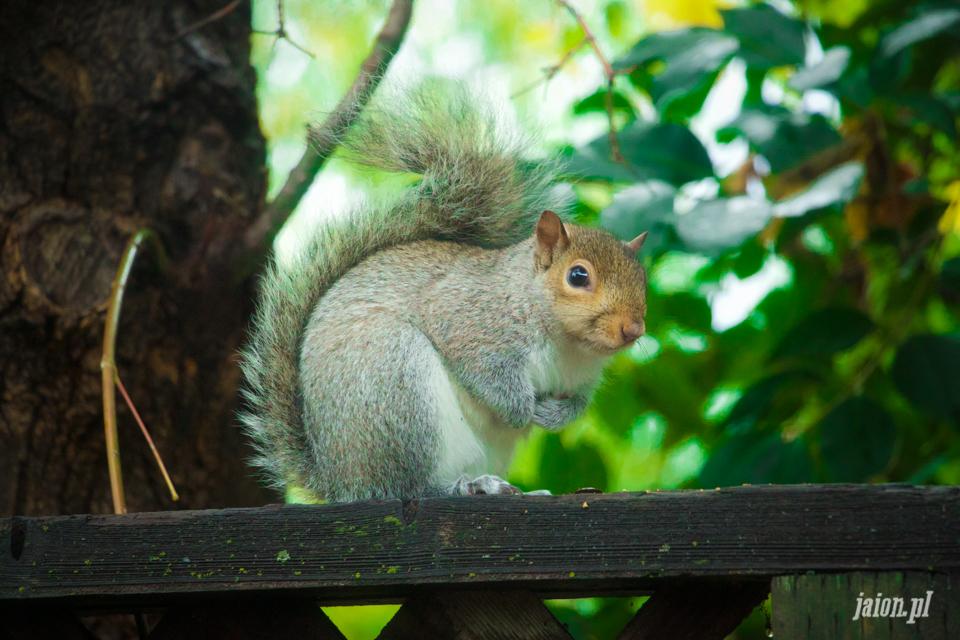Mieszkamy z wiewiórkami
