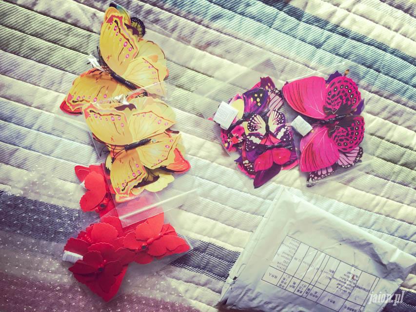 mieszkanie-w-ameryce-motyle-usa-kalifornia-blog-1