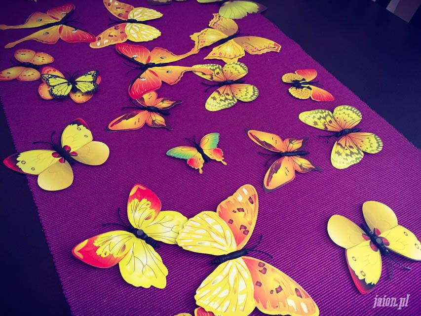 mieszkanie-w-ameryce-motyle-usa-kalifornia-blog-2