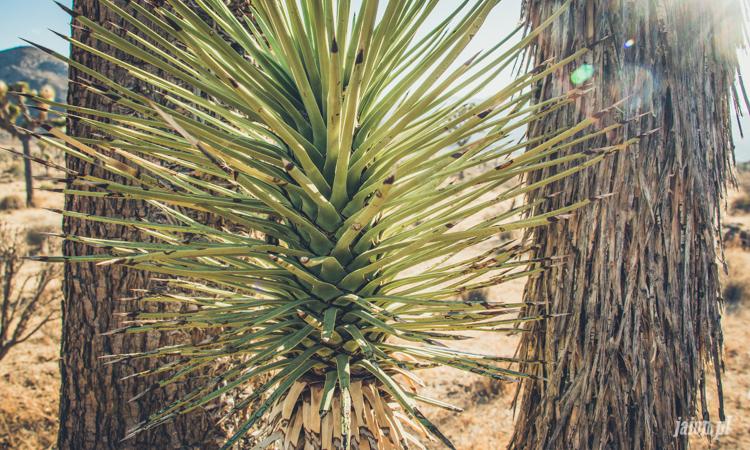 palm-springs-64-38