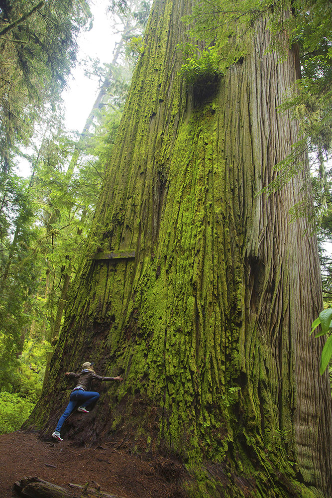 blog o usa, ameryka, lasy, parki narodowe w ameryce