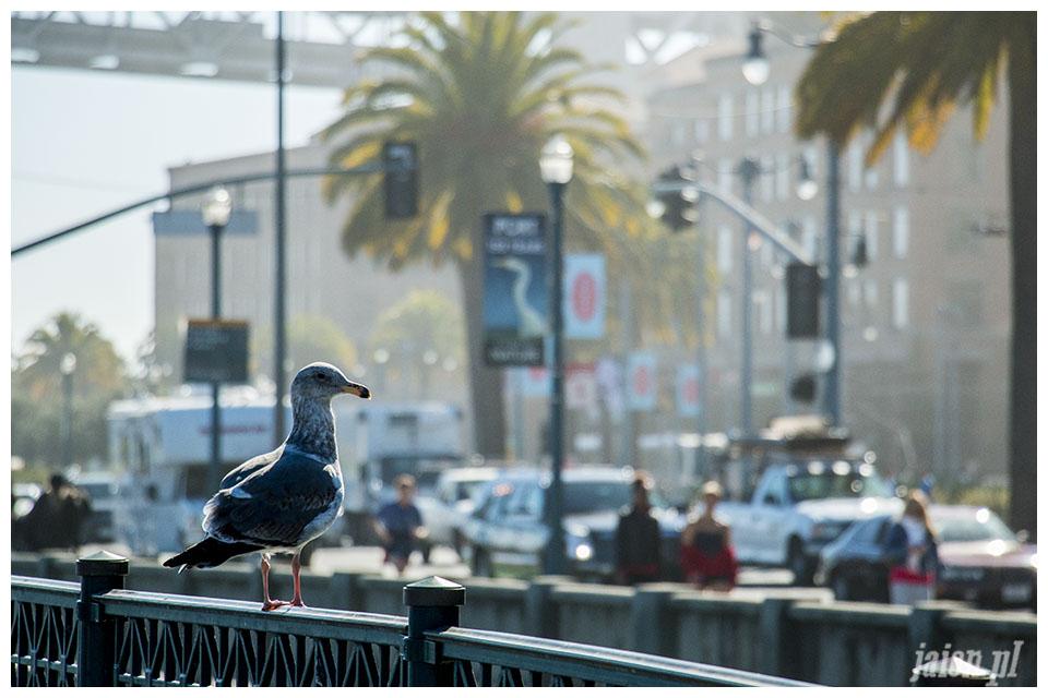 blog_ameryka_usa_kalifornia_san_francisco_pier_mewa1