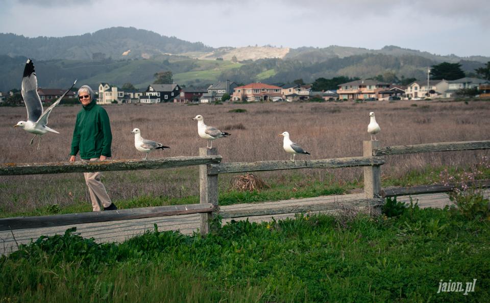 ameryka_blog_kalifornia_half_moon_bay_usa-3