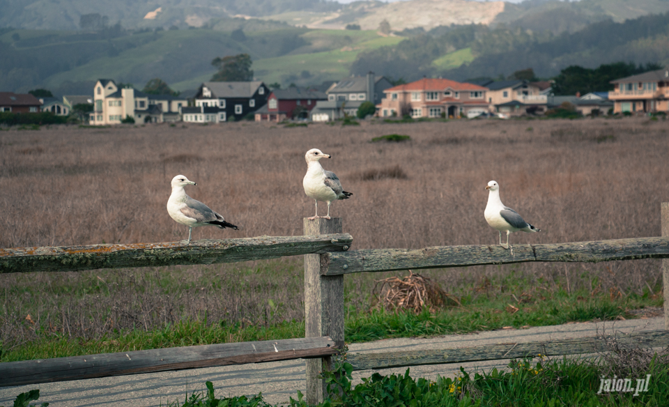 ameryka_blog_kalifornia_half_moon_bay_usa-5