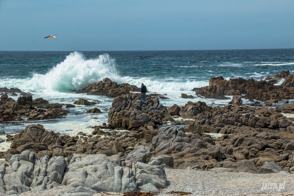 ameryka_usa_blog_big_sur_monterey_17_miles_drive_pacific_ocean-121
