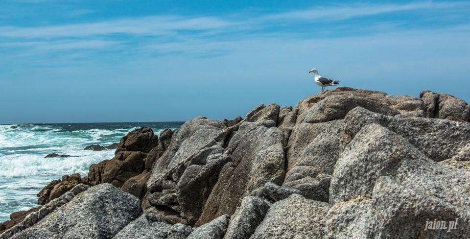 ameryka_usa_blog_big_sur_monterey_17_miles_drive_pacific_ocean-123