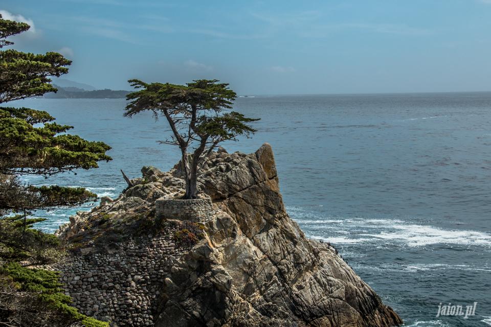 ameryka_usa_blog_big_sur_monterey_17_miles_drive_pacific_ocean-156