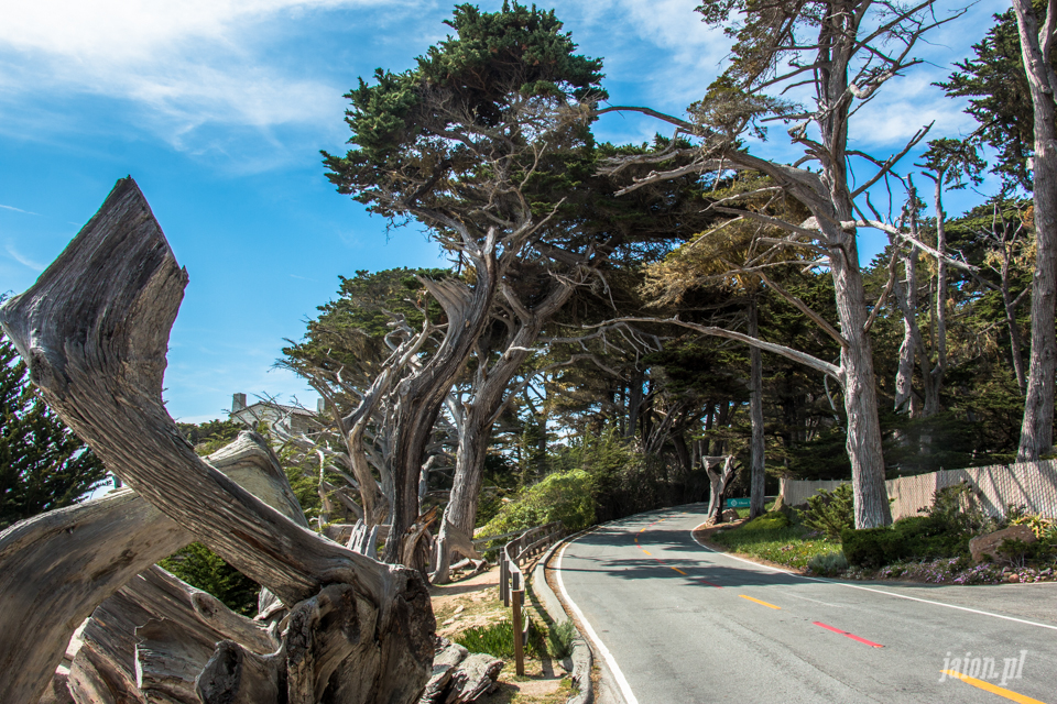 ameryka_usa_blog_big_sur_monterey_17_miles_drive_pacific_ocean-6