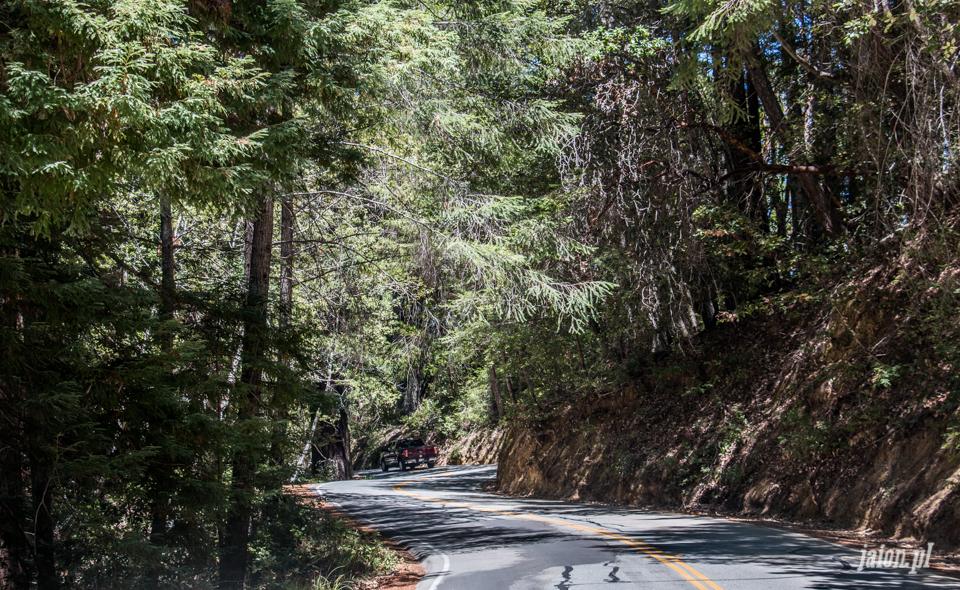 ameryka_usa_big_basin_redwood_state_park-1
