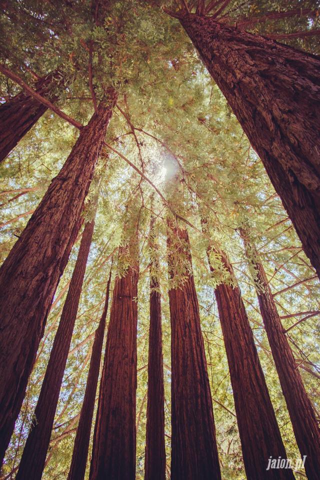 ameryka_usa_big_basin_redwood_state_park-11