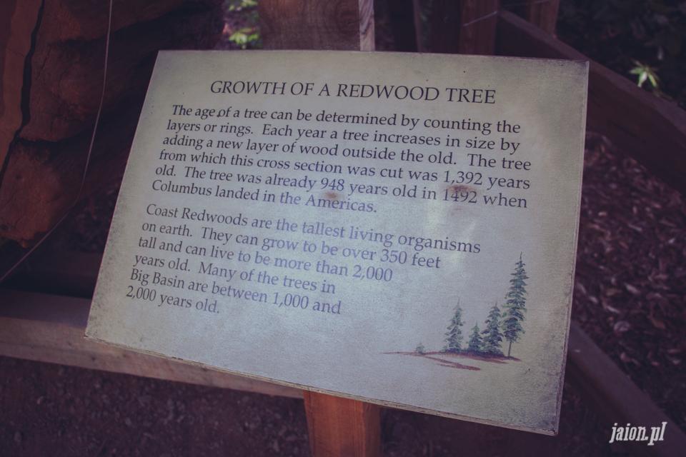 ameryka_usa_big_basin_redwood_state_park-22