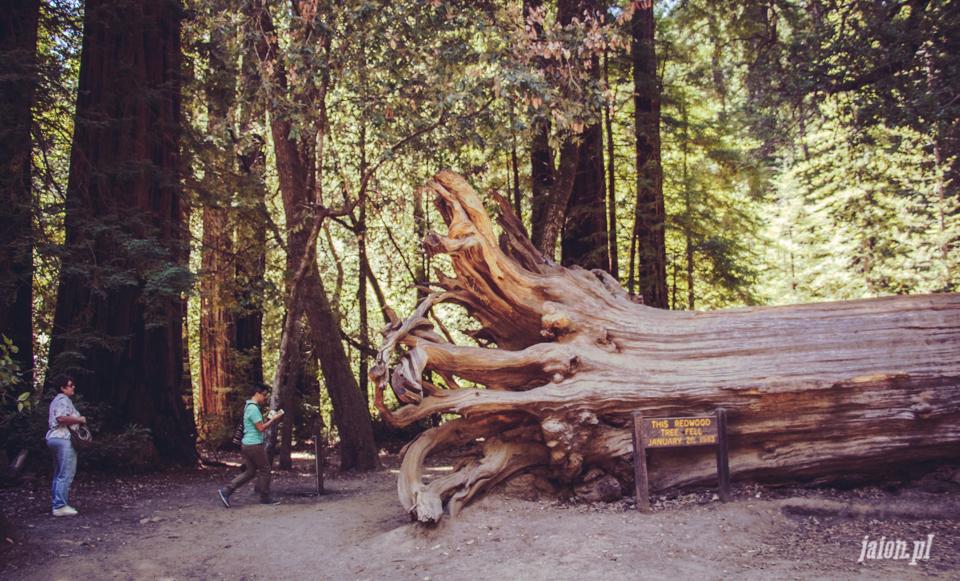 ameryka_usa_big_basin_redwood_state_park-25
