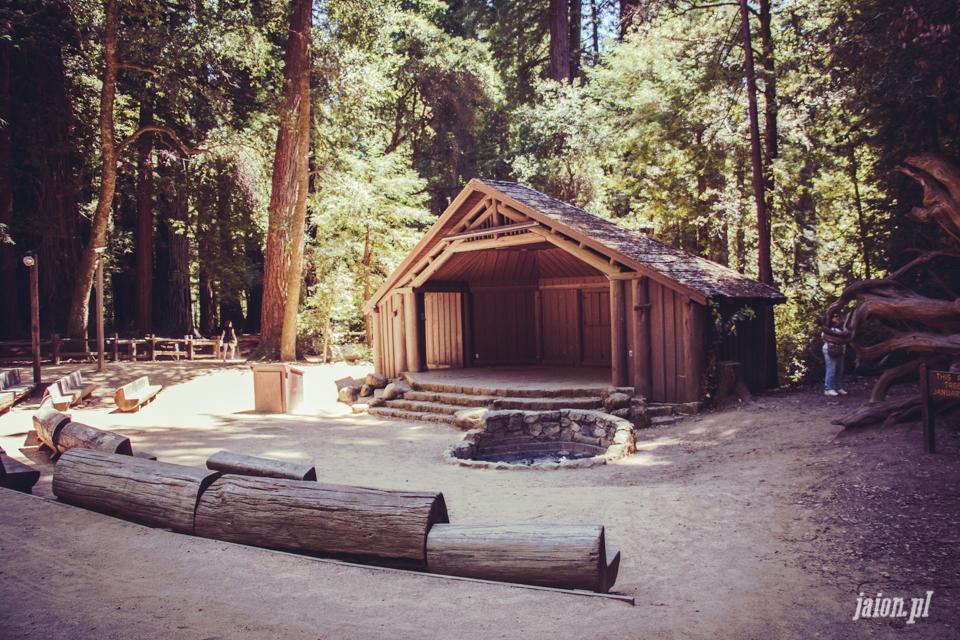ameryka_usa_big_basin_redwood_state_park-26