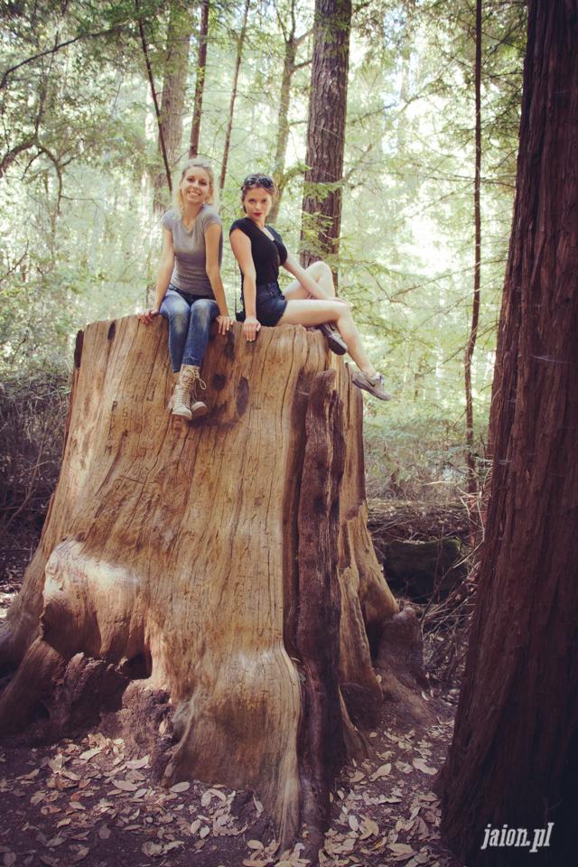 ameryka_usa_big_basin_redwood_state_park-32