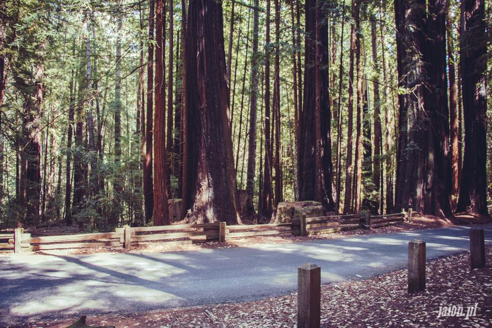 ameryka_usa_big_basin_redwood_state_park-34