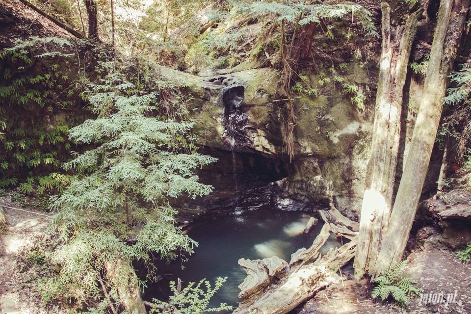 ameryka_usa_big_basin_redwood_state_park-38