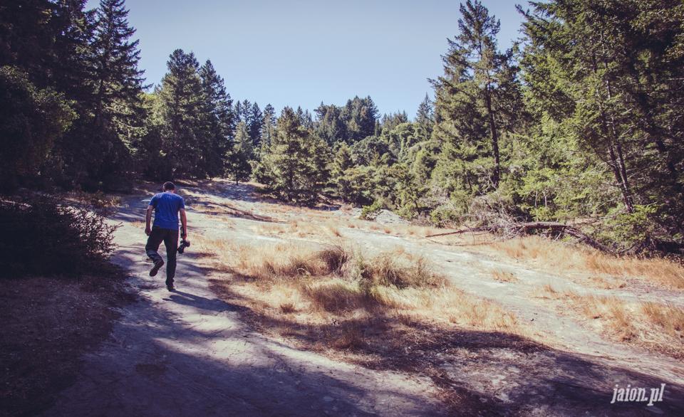 ameryka_usa_big_basin_redwood_state_park-40