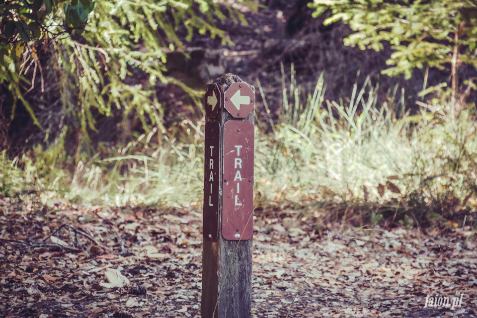 ameryka_usa_big_basin_redwood_state_park-42