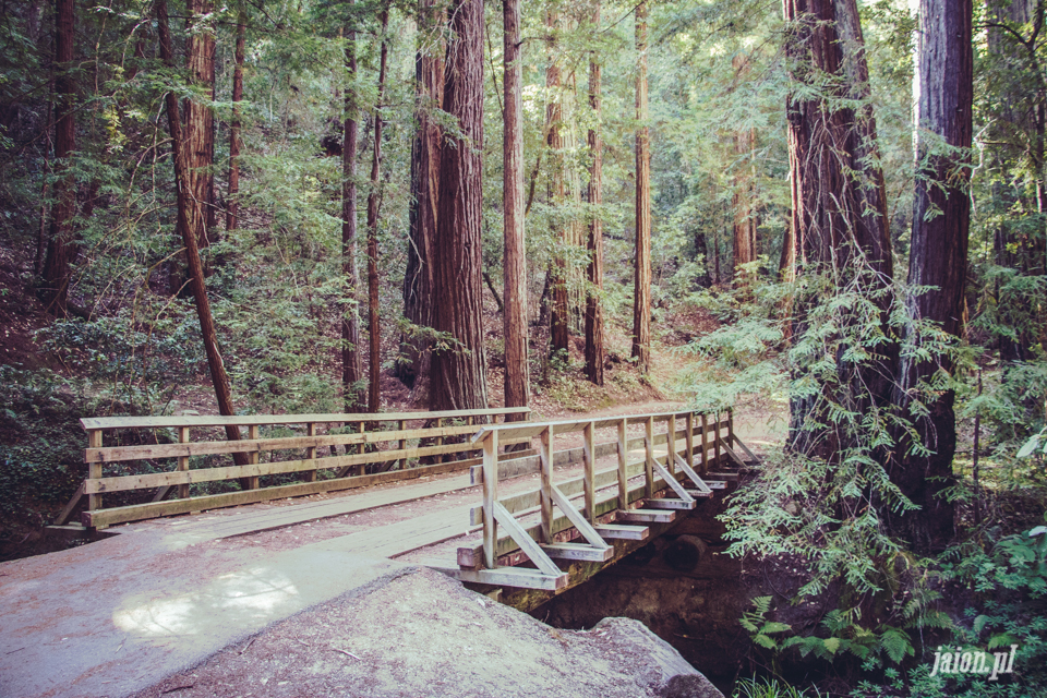 ameryka_usa_big_basin_redwood_state_park-44