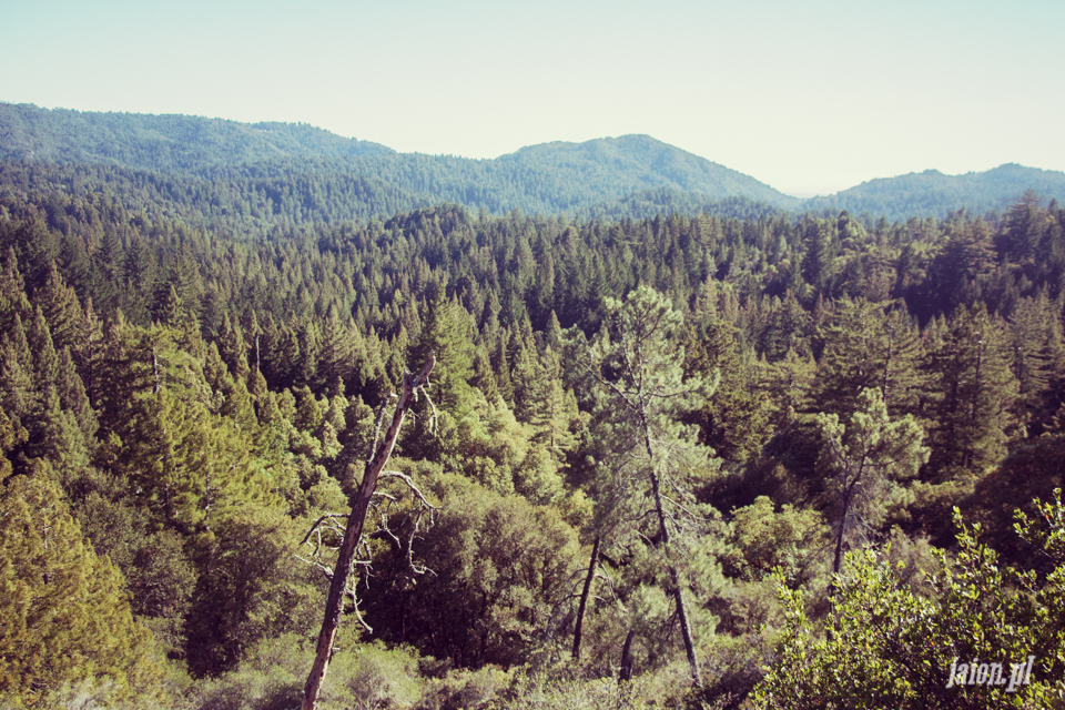 ameryka_usa_big_basin_redwood_state_park-45