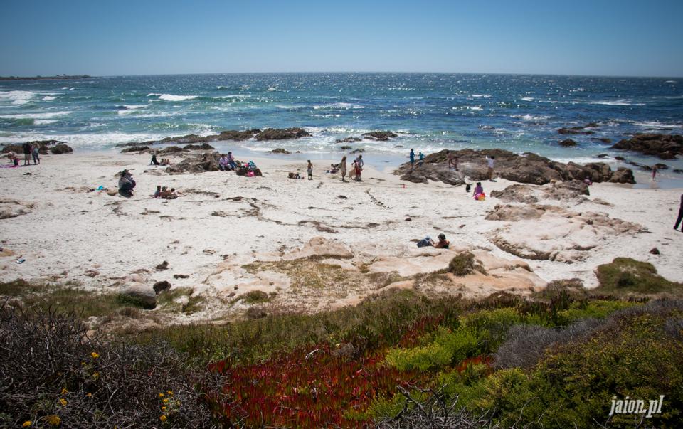 ameryka_usa_blog_monterey_kalifornia_pebble_beach_17_mile_drive_big_sur-148