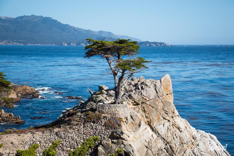 ameryka_usa_blog_monterey_kalifornia_pebble_beach_17_mile_drive_big_sur-130