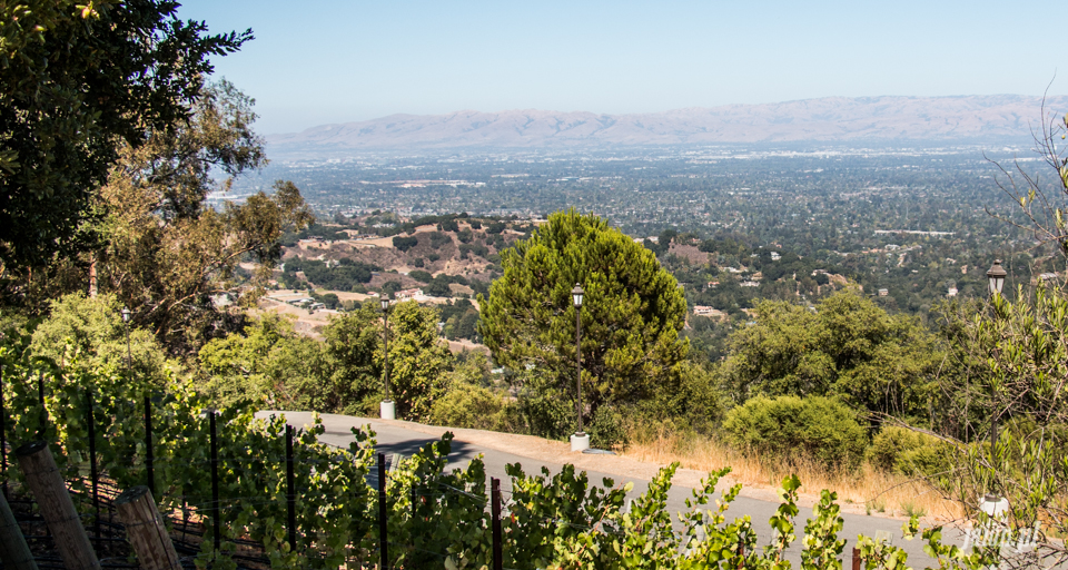 ameryka_usa_wina_kalifornijskie_mountain_winery_santa_cruz-7